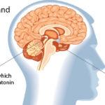 pineal-gland-melatonin