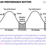 ultradian performance rhythms